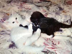 kittens_on_pink